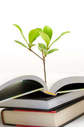 Small plant growing out of open book